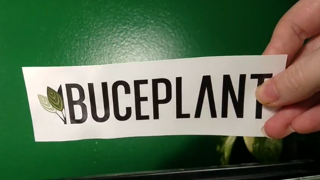Buce Plant Unboxing & Live Aquatic Plant Review